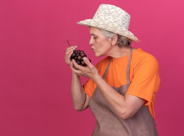 Giardiniere femminile anziano soddisfatto che porta il cappello di giardinaggio che tiene e che finge di baciare il grappolo d'uva sul rosa