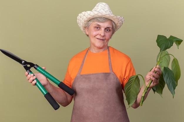 Pleased elderly female gardener wearing gardening hat holds gardening scissors and plant branch on olive green