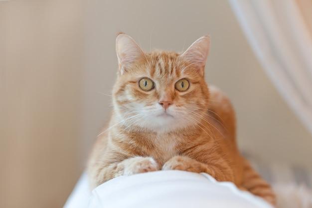 주황색 생강 고양이가 의자에 앉아 집에서 휴식을 취하고 있습니다. 아늑한 집 분위기의 재미있는 빨간 고양이. 생각하는 얼룩무늬 생강 고양이. 집 의자에 앉아 생강 고양이를 찾고 있습니다.