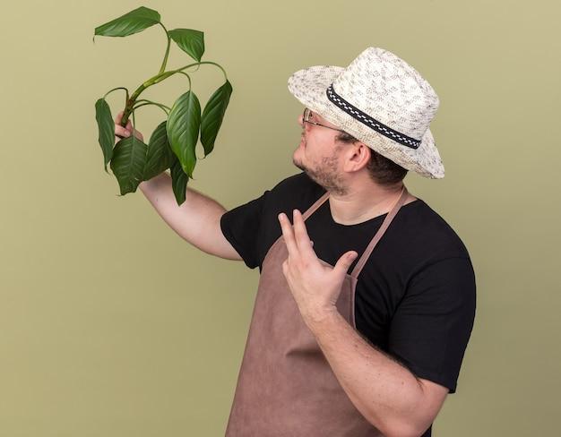 園芸帽子をかぶって、オリーブグリーンの壁に隔離された植物を指す若い男性の庭師を喜ば