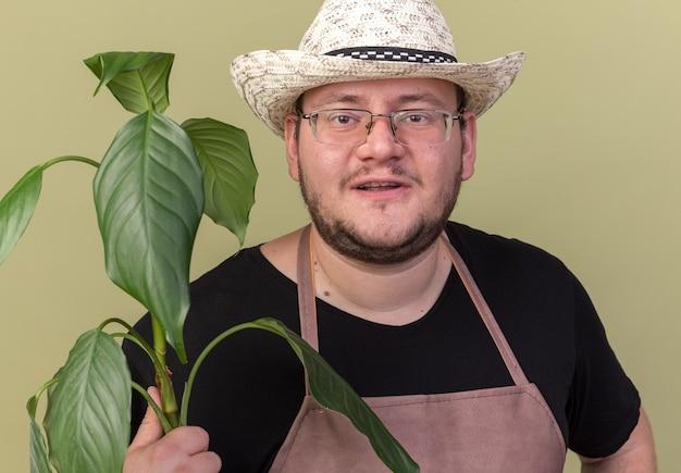 オリーブ グリーンの壁に植物を保持している園芸帽子をかぶった若い男性の庭師