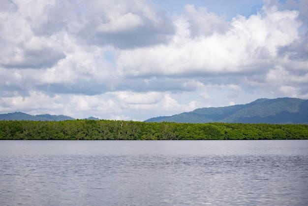 Plenary mangrove forest grow beside the river. Premium Photo