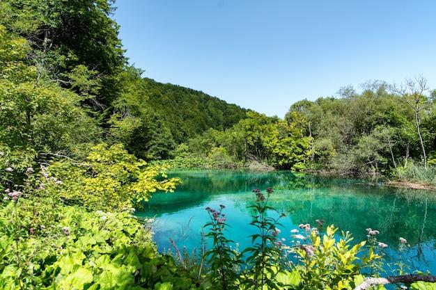 크로아티아의 플리트 비체 호수 공원 프리미엄 사진