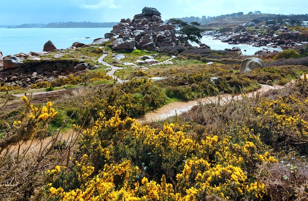 Ploumanach coast spring view  (perros-guirec, brittany, france). the pink granite coast