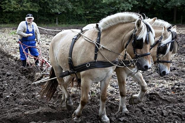 Плуг лошадей рабочих лошадей природы вспашки