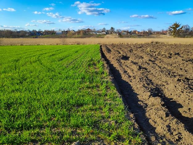 種子播種、植栽プロセス、溝のある新しく耕された土壌、日当たりの良い田園風景の緑の芝生の準備ができている耕作された農業分野。