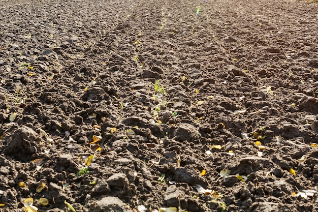 Plowed field after harvest in autumn.