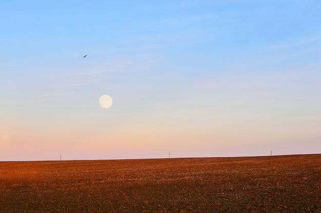 Вспаханное поле в белую ночь, в небе видны луна и летящая птица