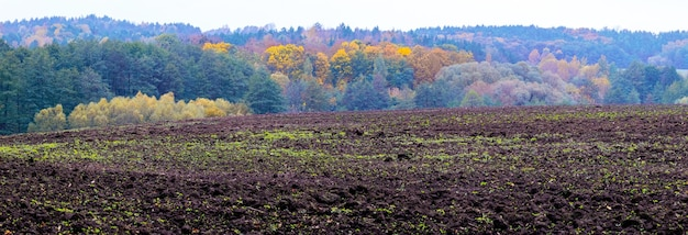色とりどりの木々のある秋の森の近くの耕作地
