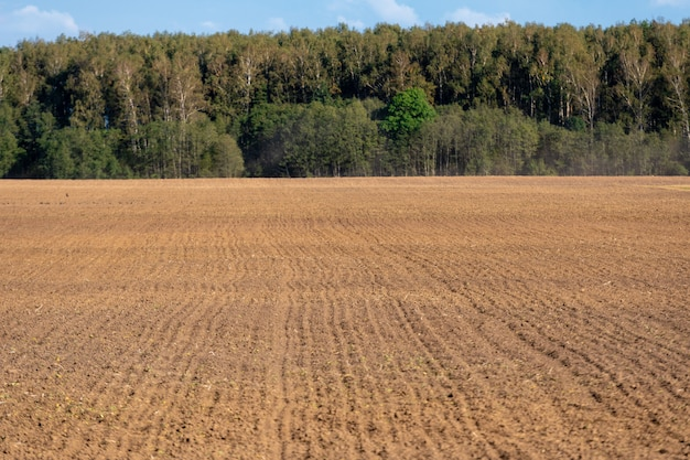 Plowed field with forest