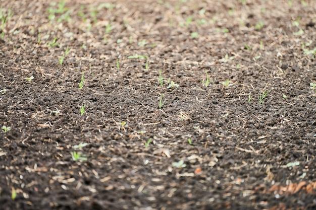 Plowed soil. close up of arable land soil. plowed for new season