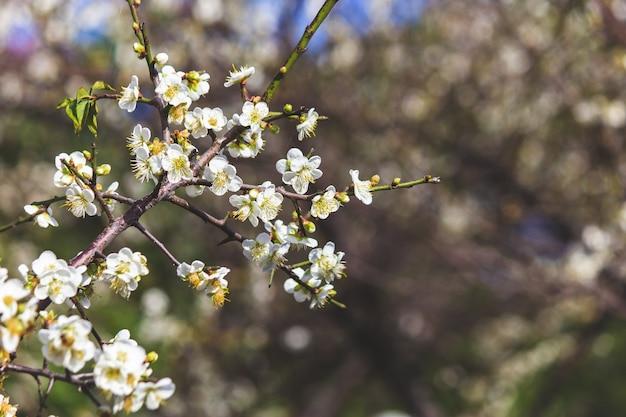 冬の梅の花