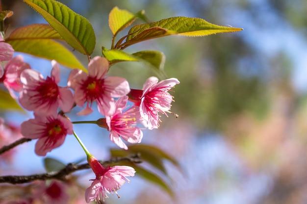 青い空に輝く梅の花