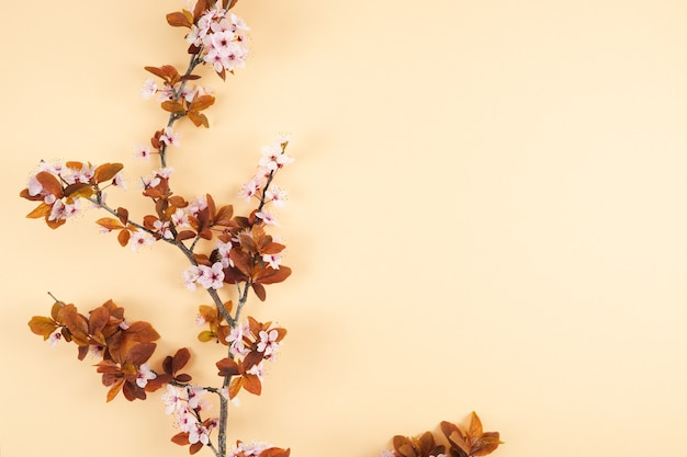 Plum branch with flowers on cream background. copy space. spring concept. top view.