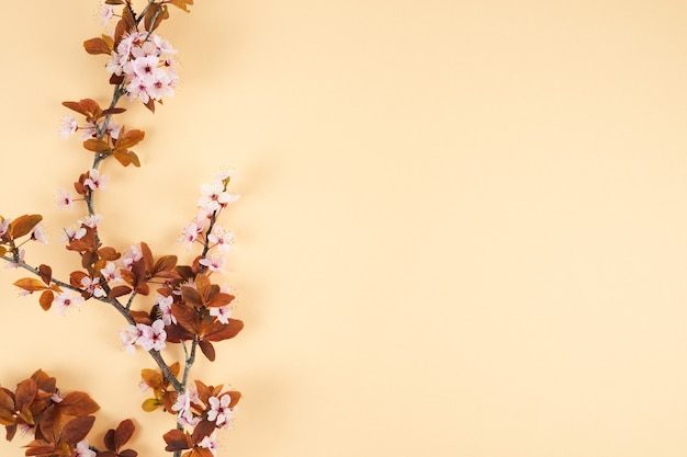 Plum branch with flowers. spring concept. top view.