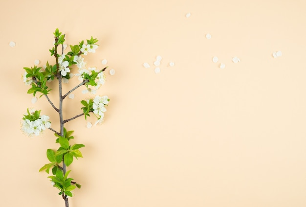 Plum branch with white flowers.top view.