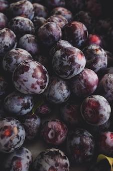 자두 열매