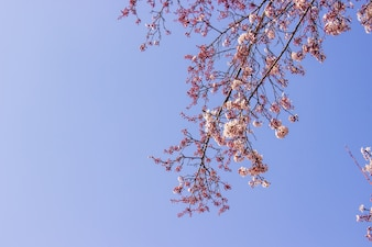 Plum pink flowers and blue sky bright background