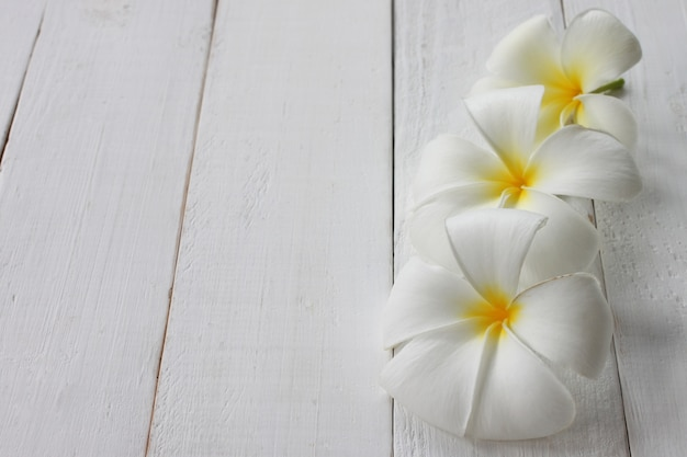 Plumeria flower in bloom is placed on a white wooden floor.