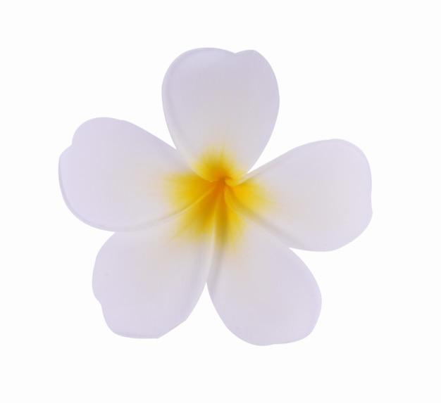 흰색 배경에 고립 된 plumeria 꽃