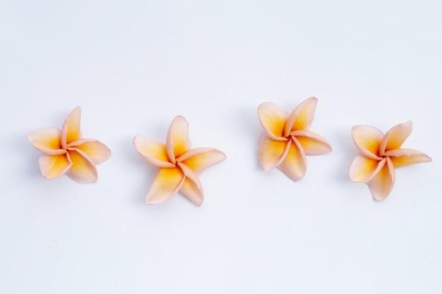 プルメリアの花が分離されました