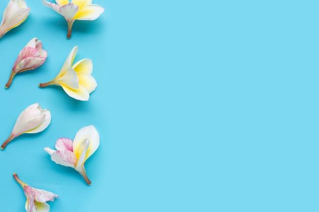 青い背景にプルメリアの花。