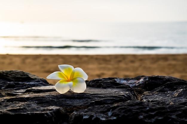A plumeria flower on the stone