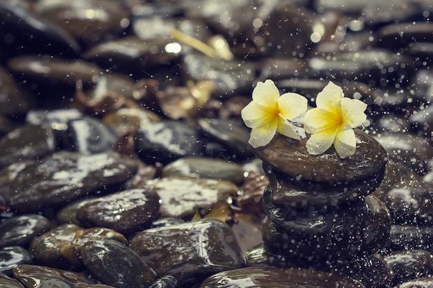 スチームスパースプラッターストーンとプルメリアの花