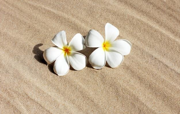 砂の背景にプルメリアの花
