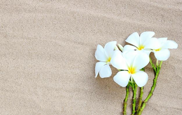 砂浜に咲くプルメリアの花。夏の背景コンセプト