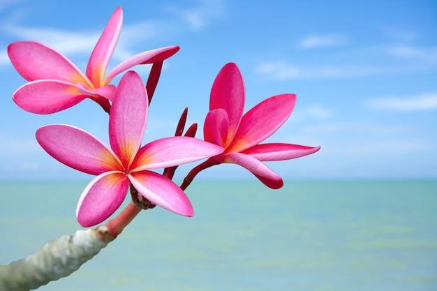 ビーチのプルメリアの花