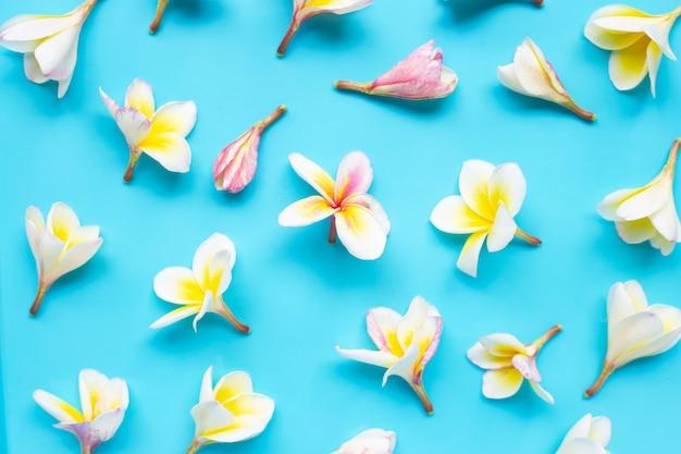Plumeria or frangipani flower on blue seamless pattern.