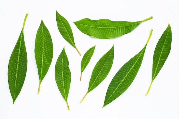 Plumeria leaves on white