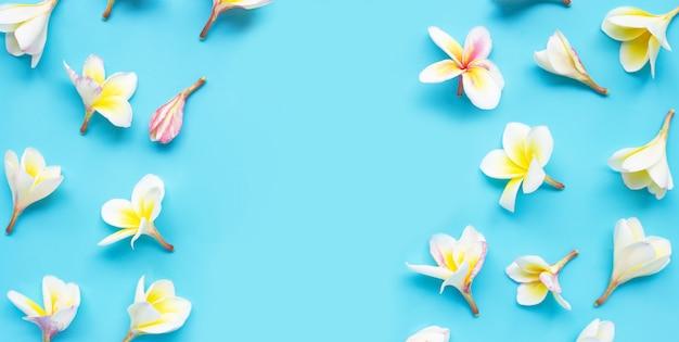 Цветок plumeria или frangipani на голубой предпосылке.