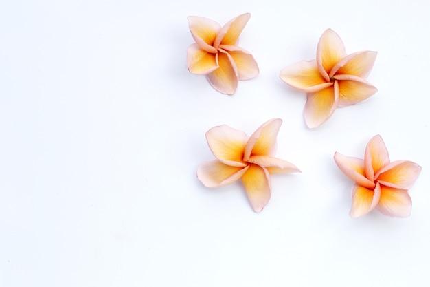 白い背景の上のプルメリアまたはフランジパニの花。上面図