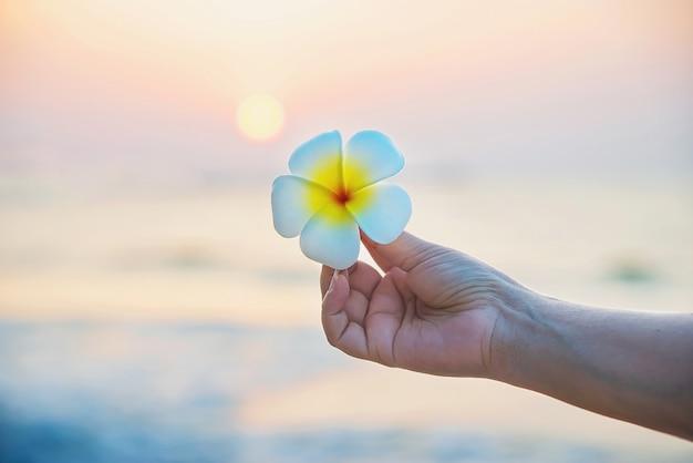 Крупным планом леди держит цветок plumeria на песчаном пляже