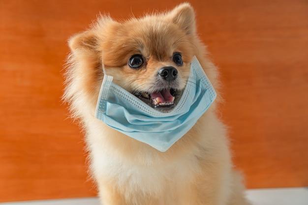 ほこりpm2を保護するための大気汚染マスクを装着した犬。