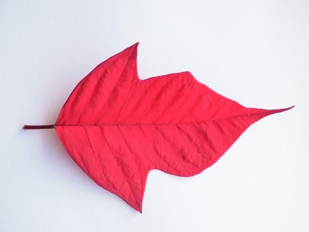 Пуансеттия рождественский звездный лист