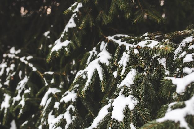 雪松の先のとがった葉