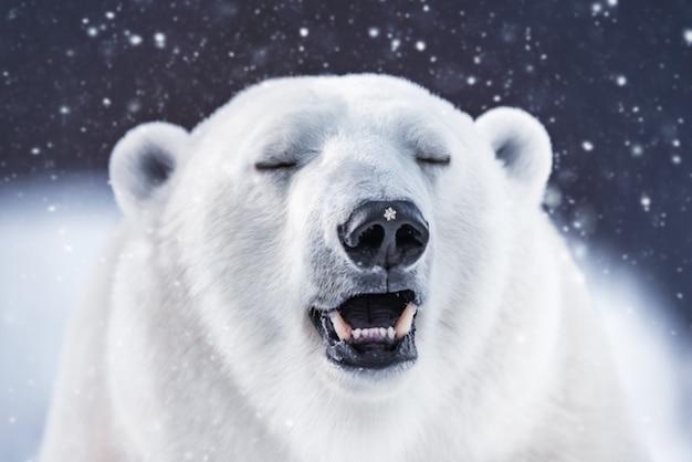 コピースペースのあるホッキョクグマカード。降雪時の冬の白いホッキョクグマ。美しい背景。