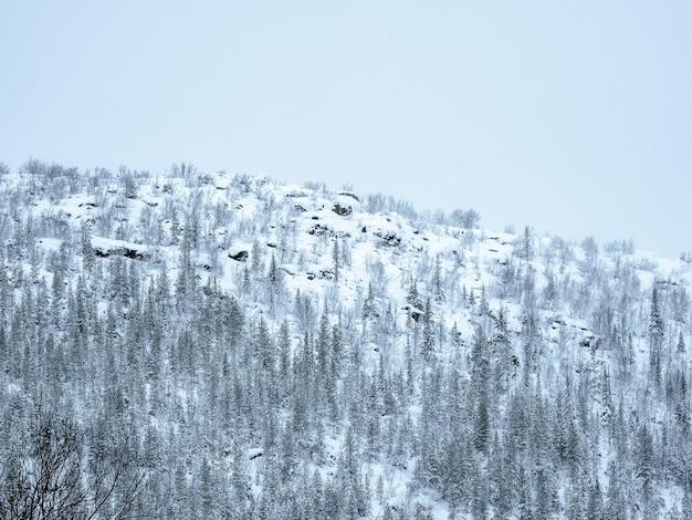 極地の丘。スノーパス。冬の北極圏の樹木が茂った雪の丘