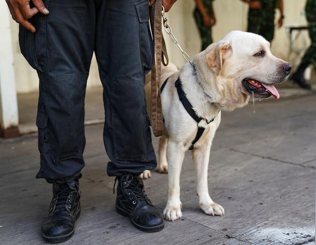 Полицейская собака на дежурстве, обнаруживает бомбу в происшествии.