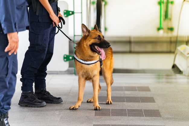Police dog standing in the train station