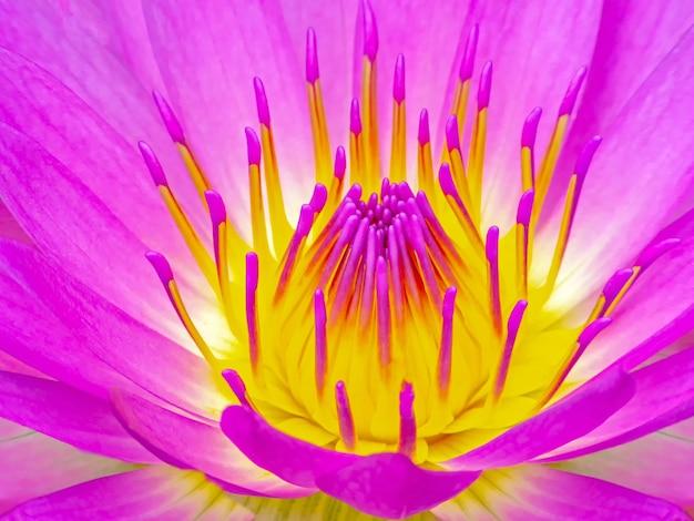 매크로 오프 핑크 연꽃의 꽃가루와 꽃잎