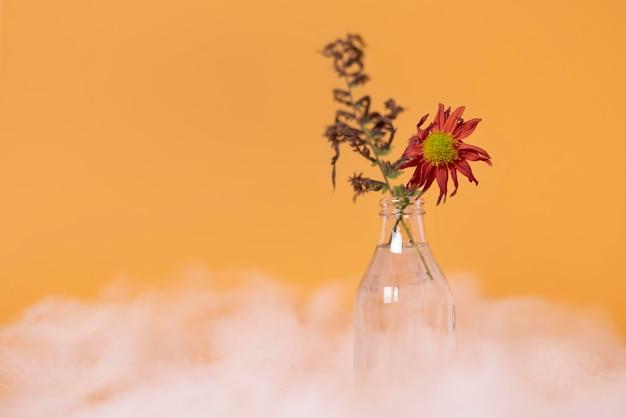 窒息した植物による汚染の概念