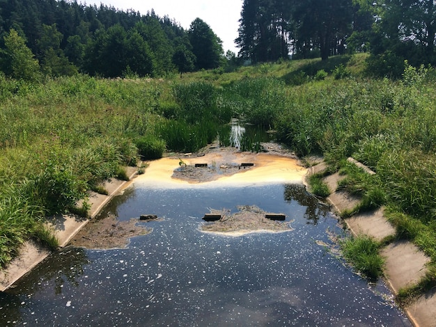 Pollution - littered pond