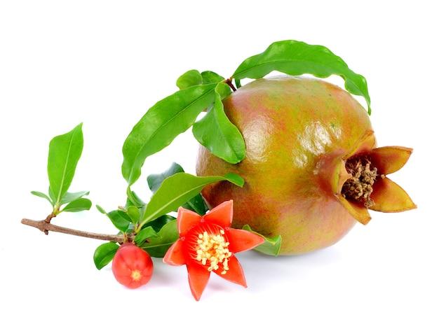 Плоды граната изолированные