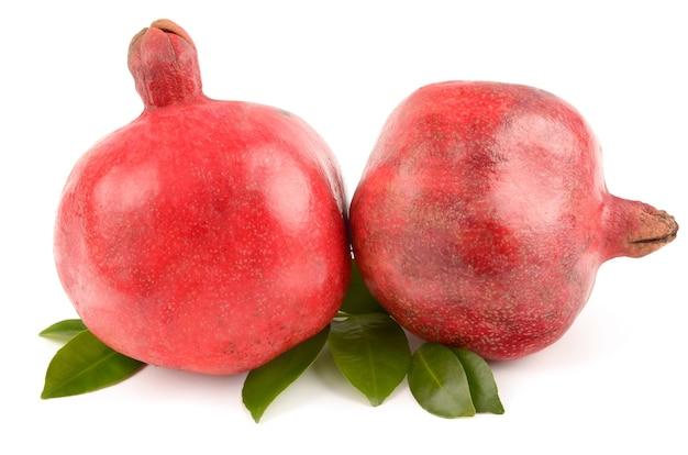 석류 흰색 절연