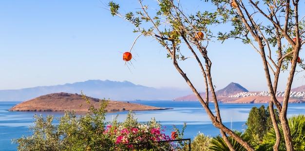 エーゲ海の海岸の美しい景色を背景に木の枝にザクロ