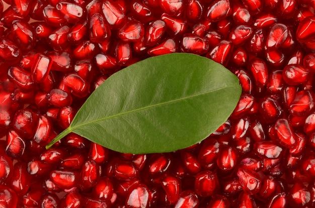 석류 씨앗